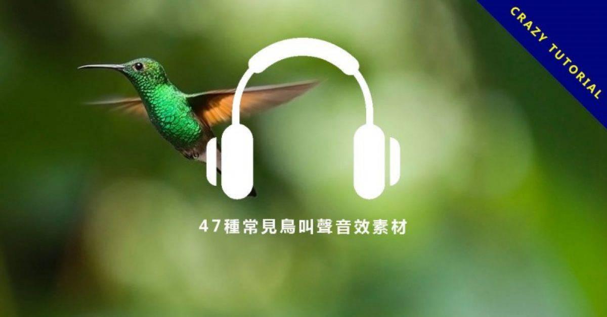 【鸟叫声音效】47种常见鸟叫声音效素材、麻雀、乌鸦、杜鹃、鸭子声音