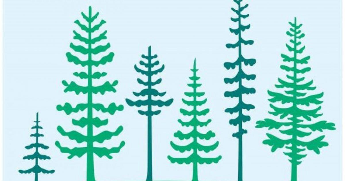 【森林图片】34套 Illustrator 森林桌布下载,森林背景推荐款