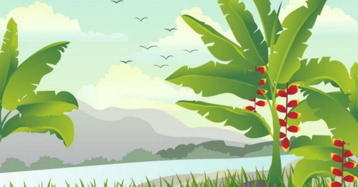 【丛林素材】29套 Illustrator 丛林背景下载,丛林插画推荐款