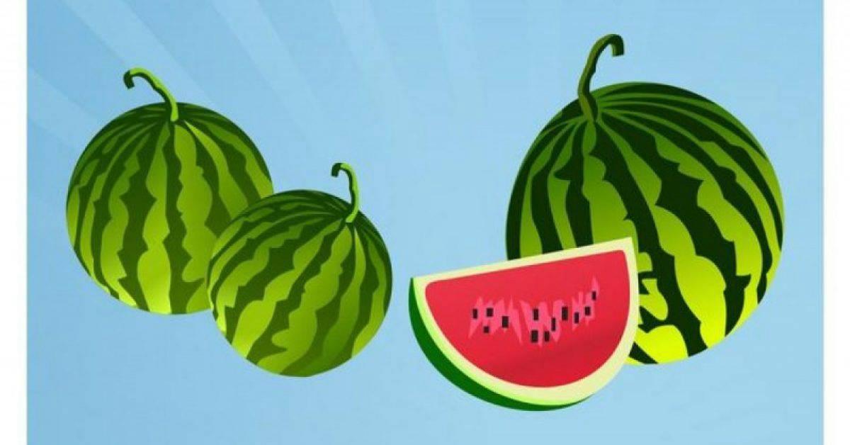【西瓜图片】38套 Illustrator 西瓜卡通图下载,西瓜图案推荐款